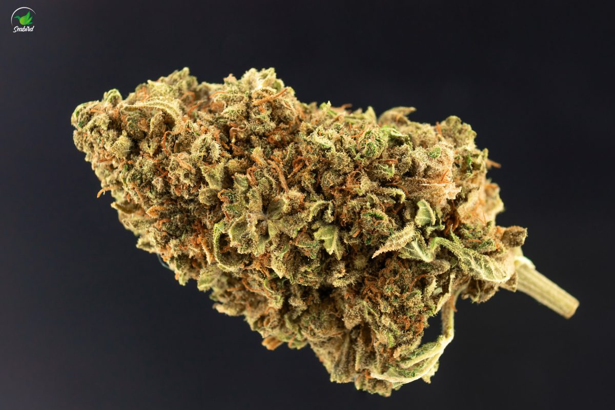 "Review: CBD-Blüten ""Redwood Kush"""